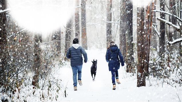Deux amis se promènent dans la forêt avec un chien.