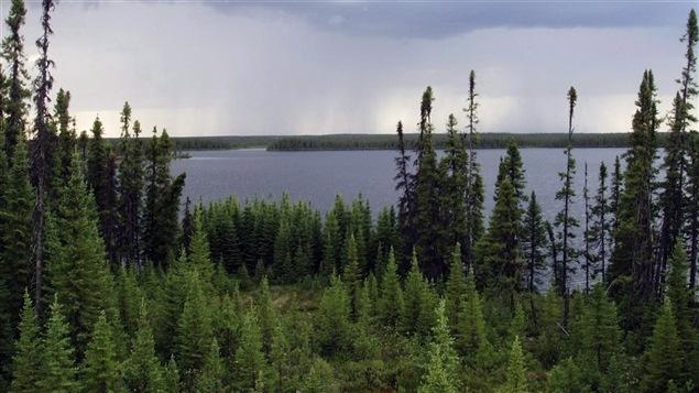 Vue de la forêt boréale québécoise