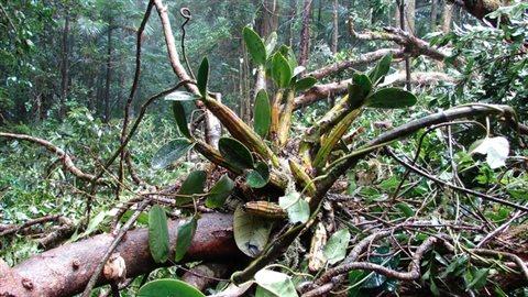 Orchidée sauvage dans la forêt