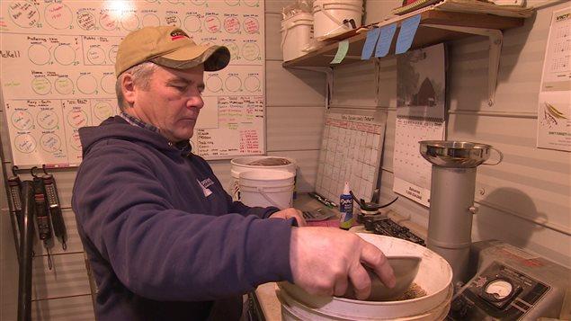 Rick Brown produit des graines à canaris depuis près de trente ans.