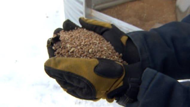 Des grains
