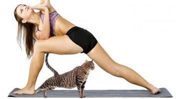 Les chats libres de faire tout ce qu'ils veulent autour des yogis