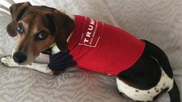 Un chien aux couleurs de Donald Trump