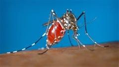 Deux vaccins prometteurs contre le virus Zika