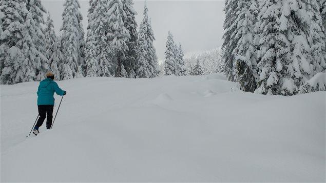 Du ski de fond pratiqué sur la montagne Cypress à West Vancouver