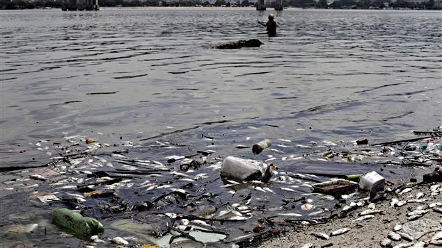 Des poissons morts et des déchets dans la baie de Guanabara, le 13 janvier 2016
