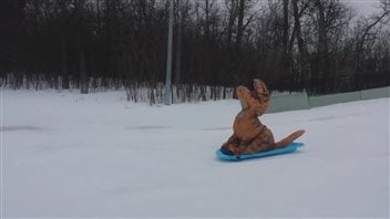 Conrad le tyrannosaure s'amuse à glisser en traîneau au parc Assiniboine, à Winnipeg.
