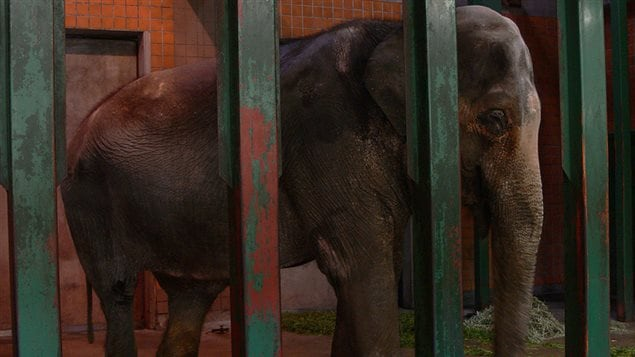 Hanako est la plus vieille éléphante du Japon.