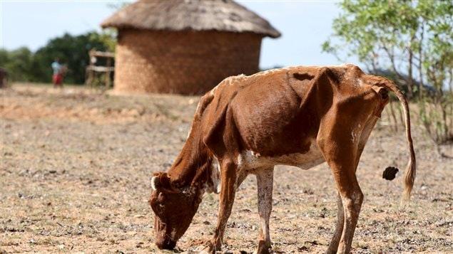 La sécheresse frappe durement le Zimbabwe