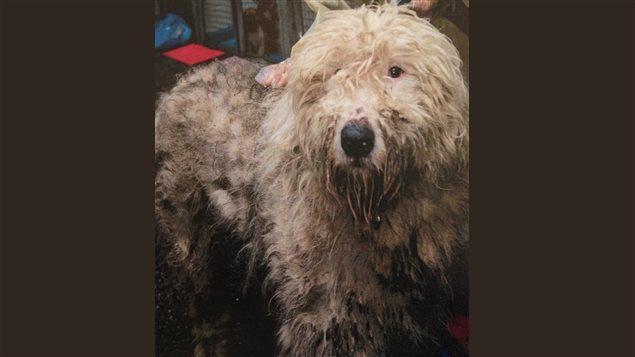 Les animaux retrouvés à Langley souffrent de graves problèmes de santé.
