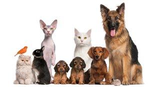 L'amour chez les animaux.