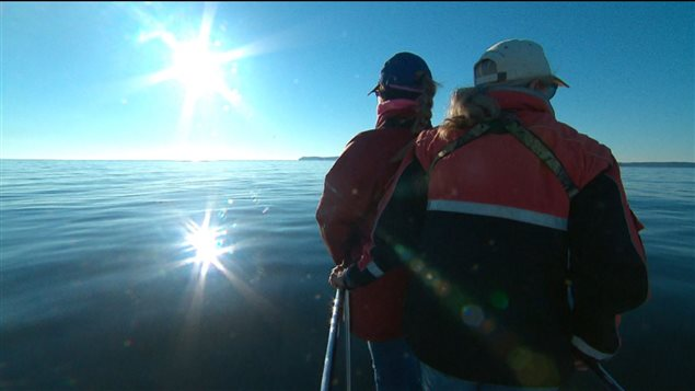 Les chercheurs tentent de retrouver les baleines qui ont changé de territoire.