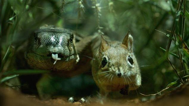 Des écosystèmes minuscules qui abritent des animaux aux habiletés surprenantes