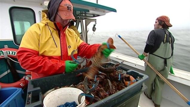 Plusieurs pêcheurs de homard ont de la difficulté à recruter des hommes de pont selon un sondage de l'Association des pêcheurs de l'Île-du-Prince-Édouard.