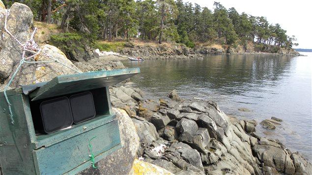 Les chercheurs ont utilisé des enceintes installées sur la plage pour diffuser le bruit des prédateurs qui ont disparu de la région.