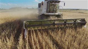 Documentaire « OGM - mensonges et vérités »
