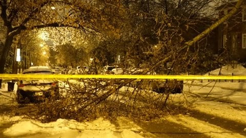 Une branche est tombée en raison du poids du verglas sur la rue Dézéry à Montréal.