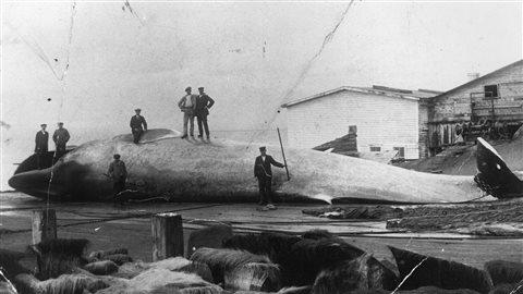 Chasseurs de baleine