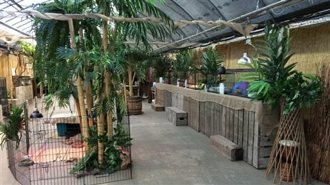 Les animaux d'Éducazoo étaient présentés jusqu'à la fin du mois au Centre Jardin Hamel.