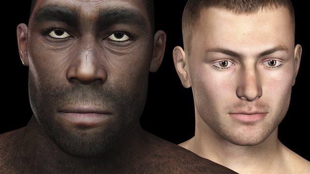 Représentation d'un Homo erectus et d'un homme moderne