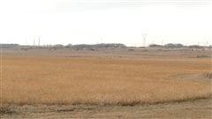 Début des semences dans plusieurs régions du Manitoba