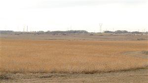 Des champs près de Brandon au Manitoba.