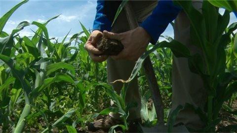 Du phosphore dans l'agriculture