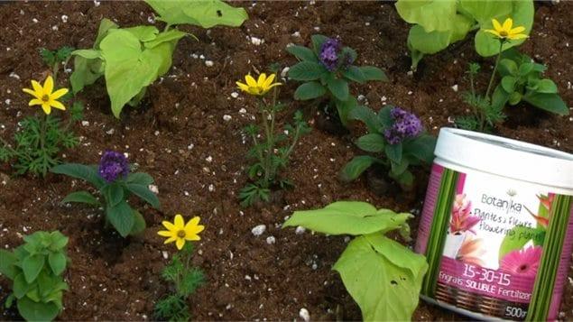 Des plantes et de l'engrais