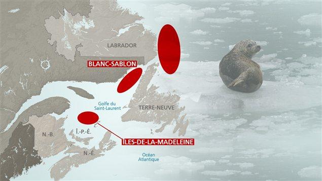Zones où on trouve les phoques en atlantique