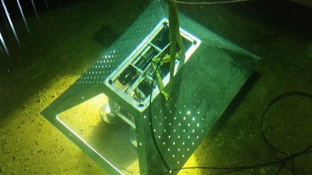 Des microphones sous-marins enregistreront le passage de baleines au large de Campbell River.