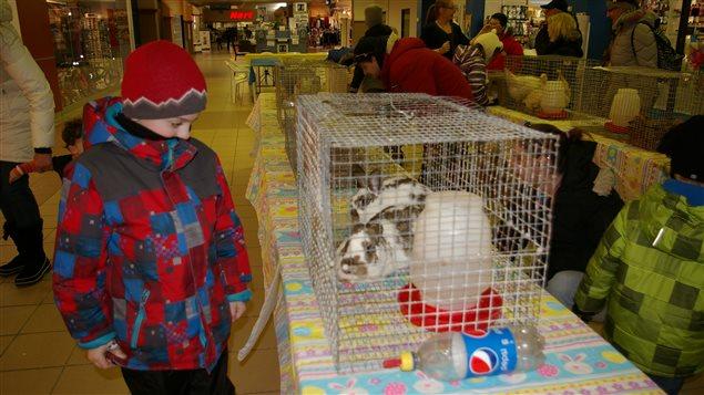 Les enfants aiment bien  fréquenter les fermettes installées pour Pâques dans les centres commerciaux.
