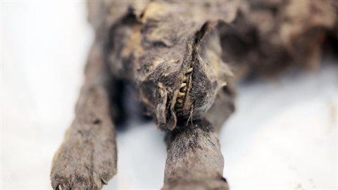 Gros plan des restes de l'un des chiens de Toumat.