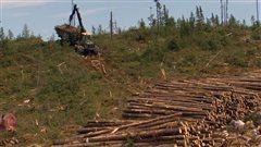 Bilan du nouveau régime forestier