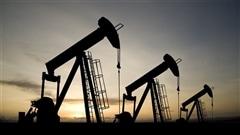 Mobilisation à l'UdeMcontre des millions investis dans le pétrole