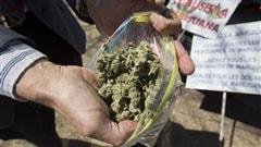 Cultiver son propre cannabis médical: des répercussions jusqu'en Estrie et au Centre-du-Québec