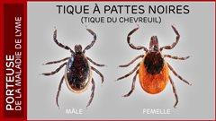 Maladie de Lyme : le nombre de cas a doublé en un an en Estrie et en Montérégie