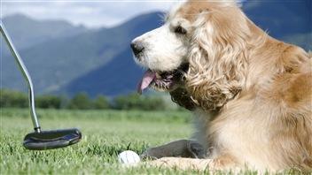Jouer au golf... avec son chien!