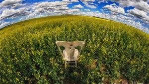 La beauté des Prairies installée confortablement dans une chaise