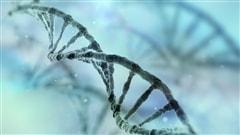 En route vers le plus gros projet de séquençage de génomes humains