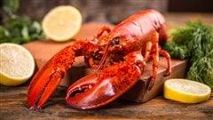 Homard : conseils pour une cuisson parfaite