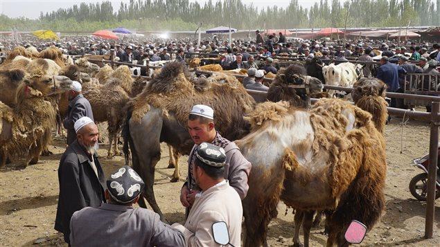 Des hommes discutent, entourés de chameaux.