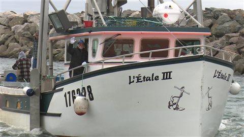Crabier de Sainte-Thérèse-de-Gaspé