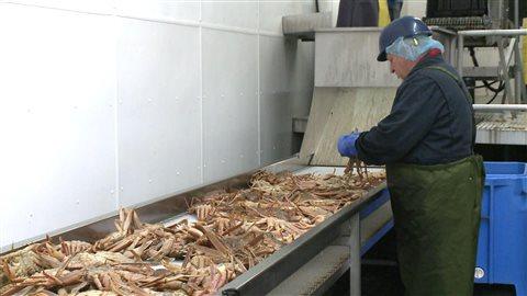 Travailleur d'une usine de crabe