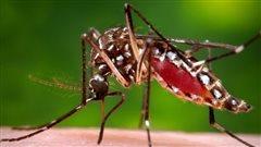 Des experts sonnent l'alarme quant au virus Zika à Rio