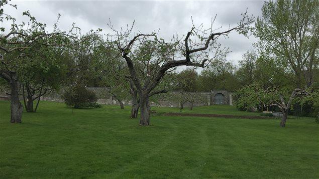 Dans ces vergers en ville, on compte 80 arbres fruitiers, dont 50 pommiers.