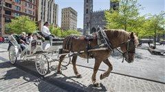 Il y aura des calèches cet été dans le Vieux-Montréal