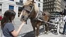 Vieux-Montréal: plus aucune calèche pendant un an dès mardi