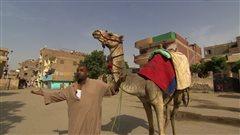 Autre coup dur pour l'industrie touristique égyptienne