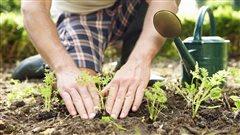 Récoltes urbaines : réduire l'exposition aux contaminants