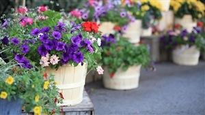 C'est le temps des jardinières et des boîtes à fleurs.